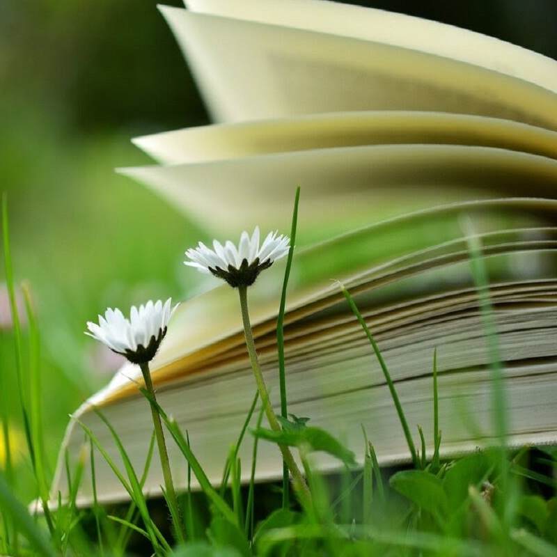 Open book in the grass with flowers