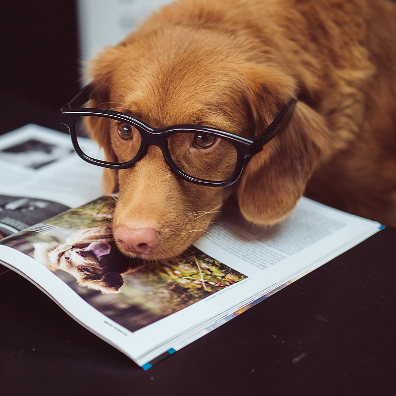 Dog Reading Doggy Tales